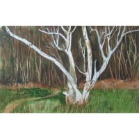 Landscapes - Birch Tree