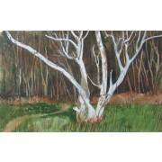 Landscapes - Birch Tree